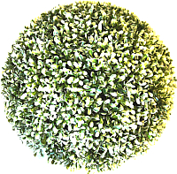 Искусственное растение Green Fly Самшит Вальс / С-5-22 -
